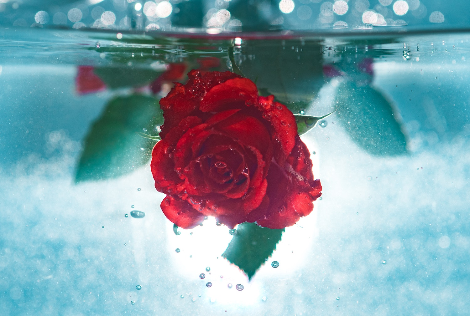 drowning rose.jpg