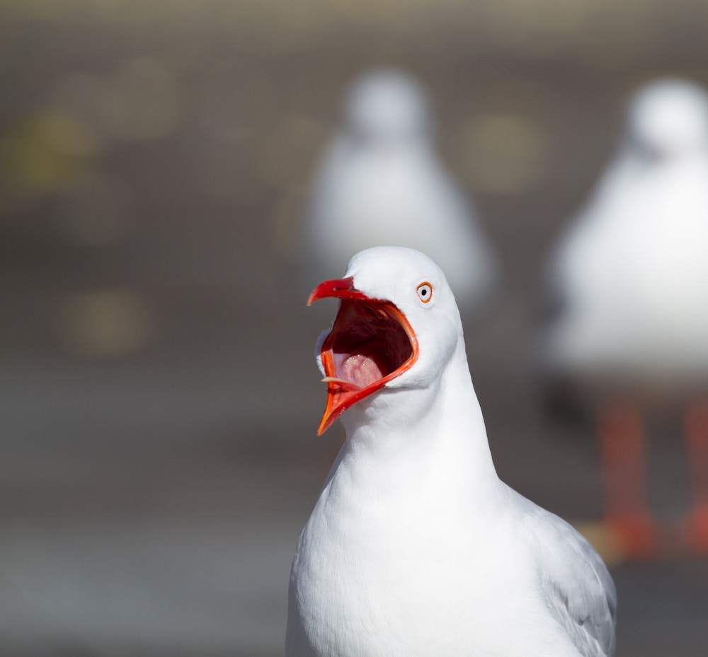 bird screaming.jpg