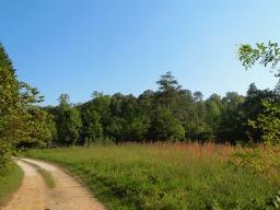 meadow8.12.jpg