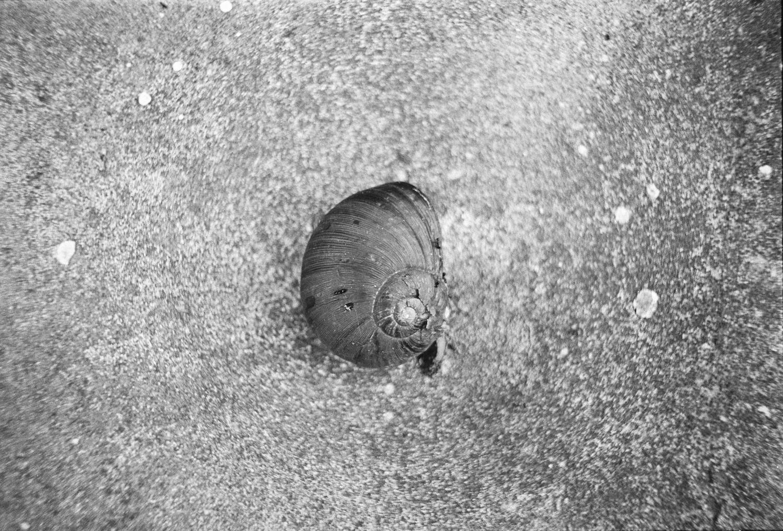 780301_16_Snail.jpg