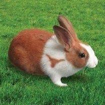 Rabbit horn.jpg
