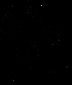 CARE_Australia-logo-463155D120-seeklogo.com copy.png