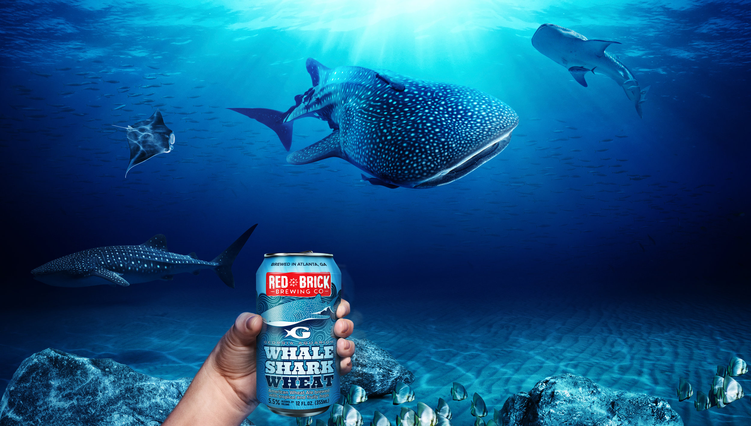 Sips_Tailgate_whalesharks_a@465.jpg