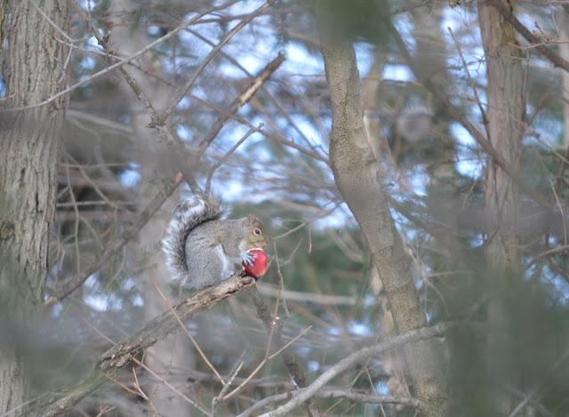 Squirrel+4+tree.jpg