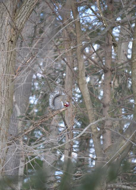 Squirrel+5+tree.jpg
