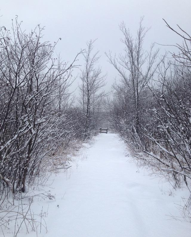 boardwalk in winter   photo by Phoebe Stout