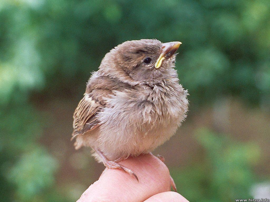 bABYbird.jpg