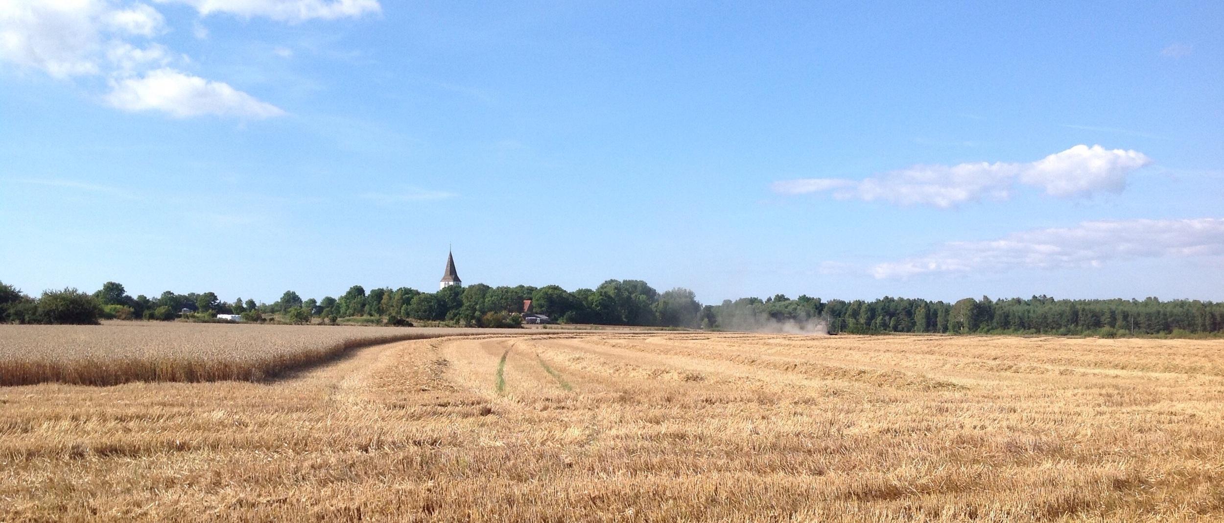 Looking toward Levide church, combine half way through the field.