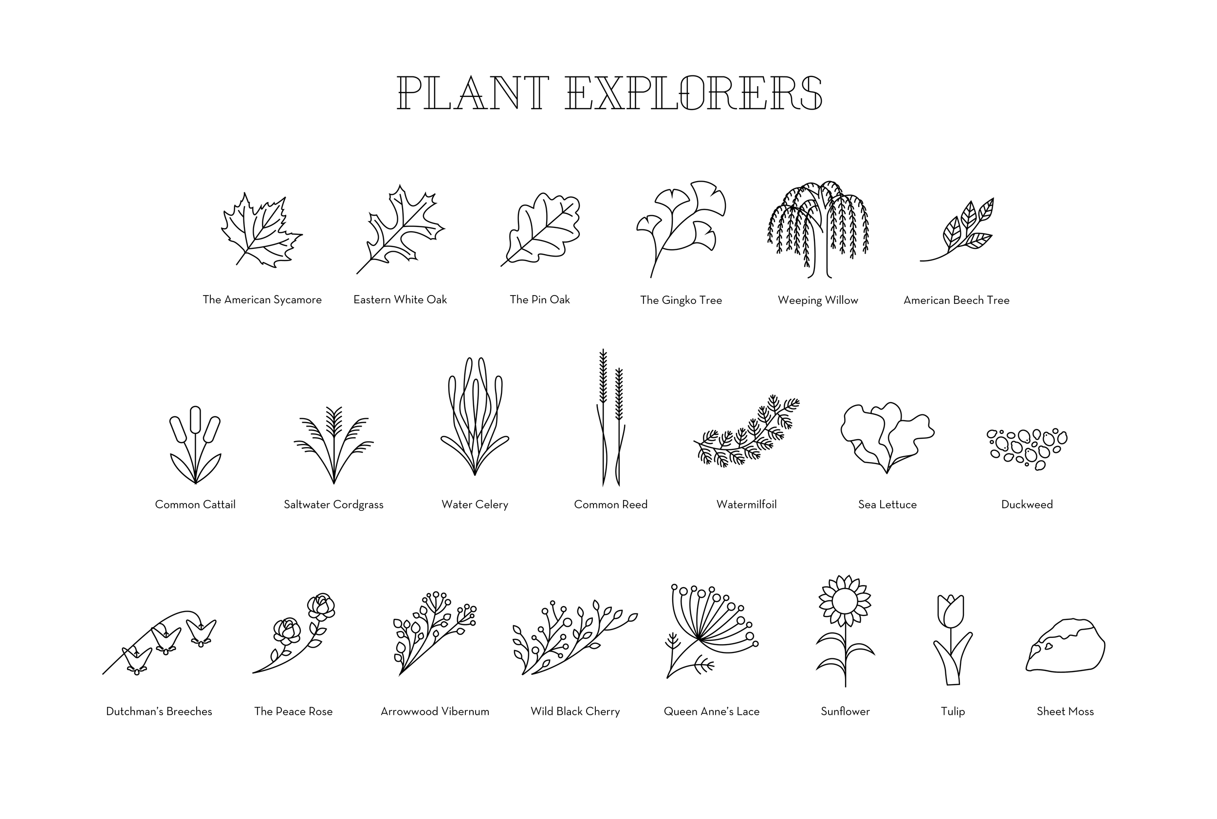826_Individuals_Plants_01.png
