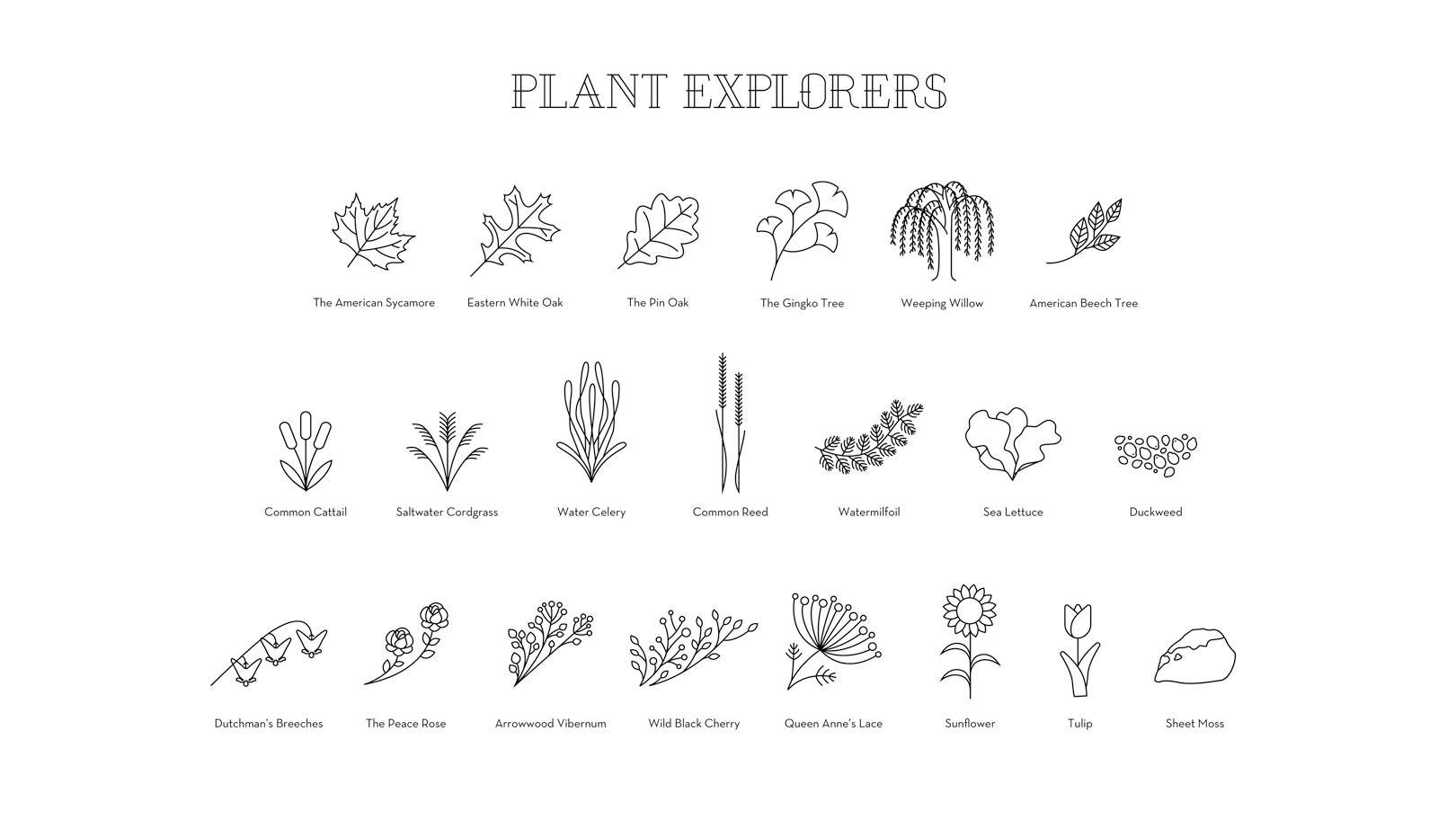 826_Individuals_Plants_01.png