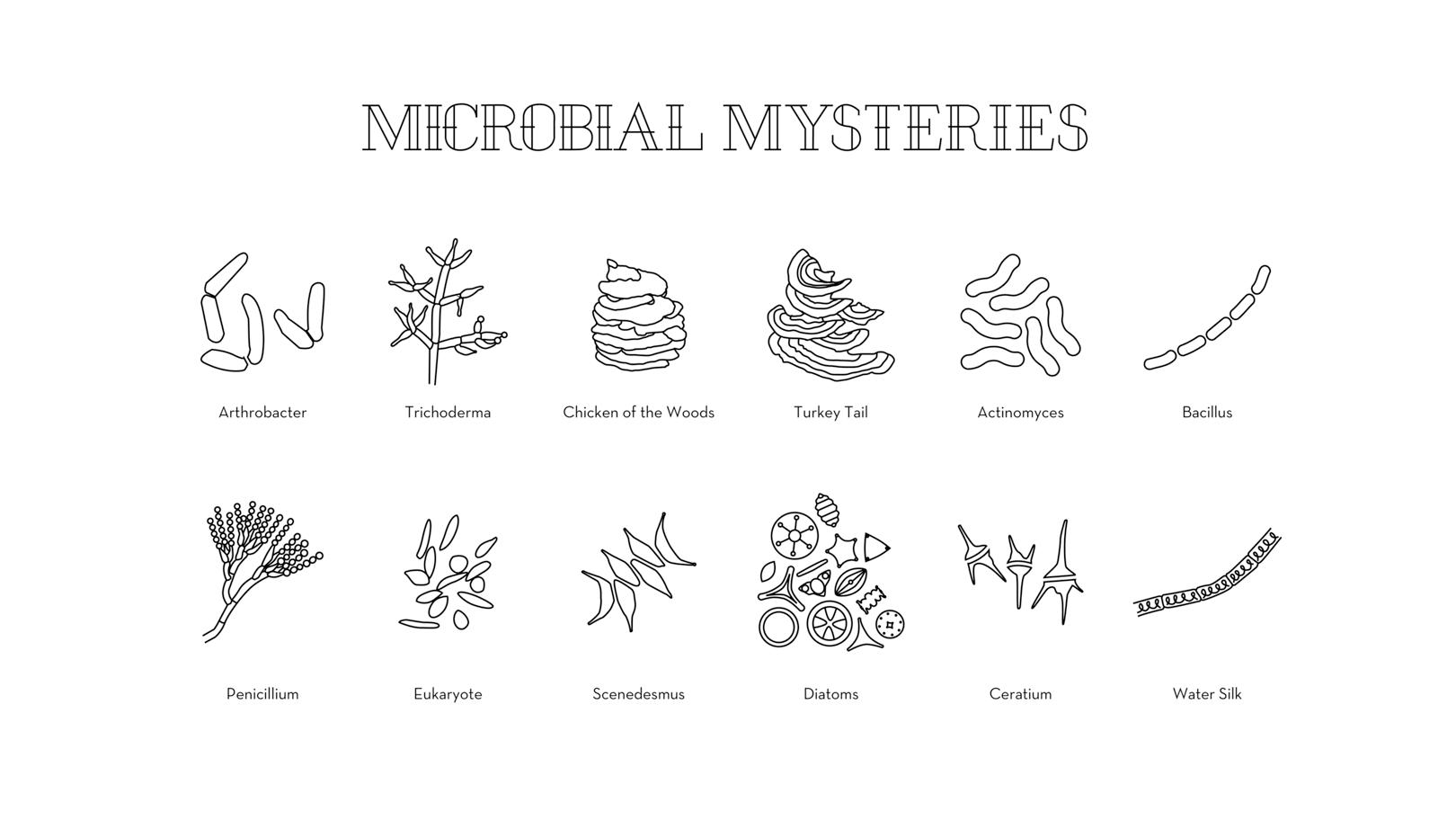 826_Individuals_Microbes_02.png