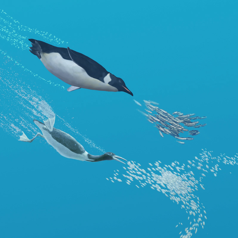 Birds, including penguins and the extinct Cretaceous seabird  Hesperornis , have repeatedly adapted to marine life since the Mesozoic - often giving up the ability to fly in the process.  Art by Karen Carr