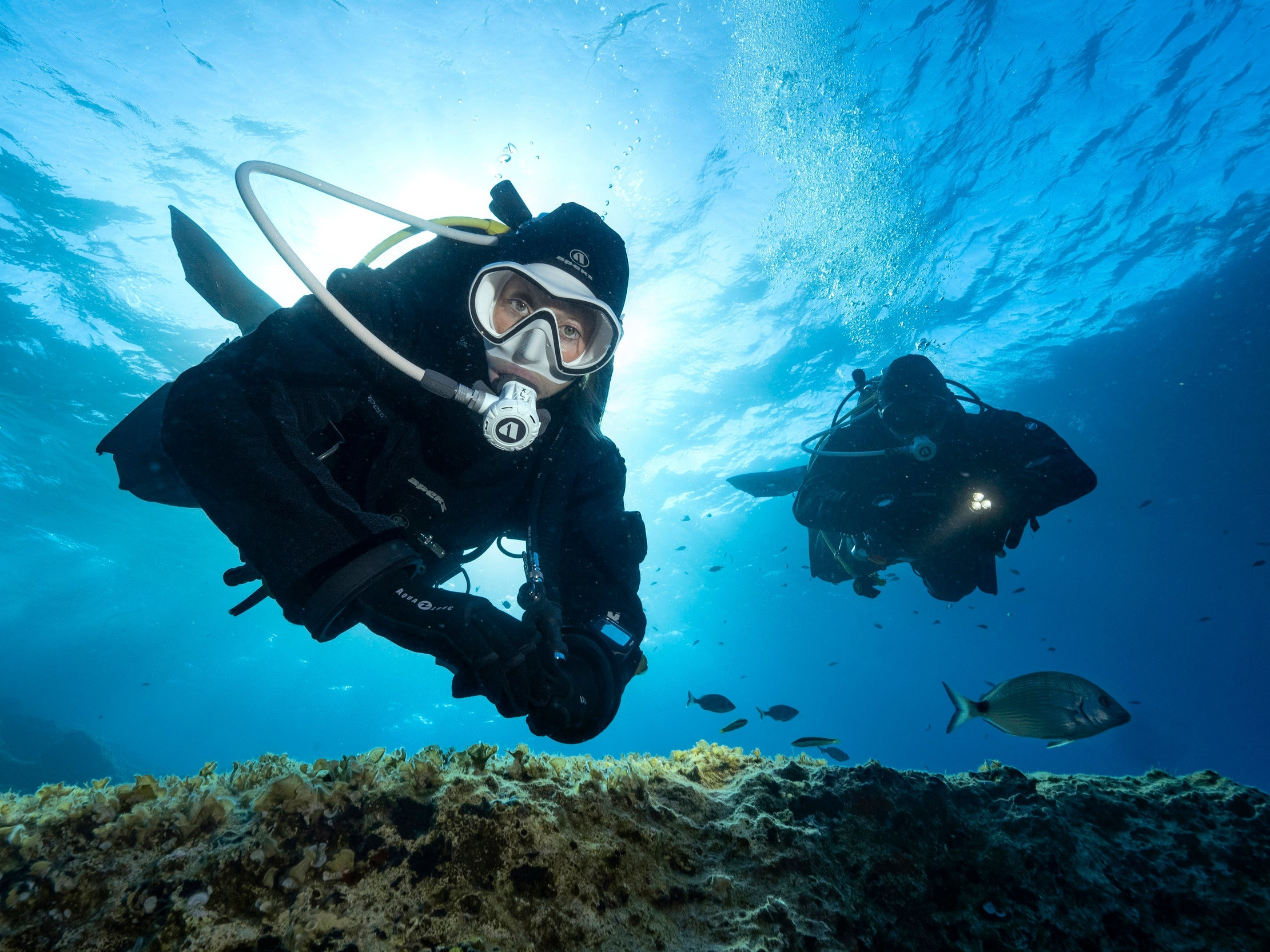 Courses - DIVE INTO ROWAND'S REEF COURSES AND EXPLORE AN INCREDIBLE NEW WORLD