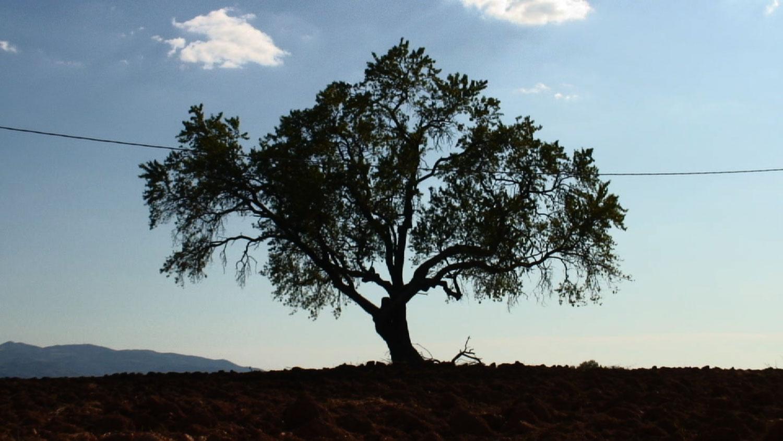 0-Gorchakovs-Wish-tree-1500w.jpg