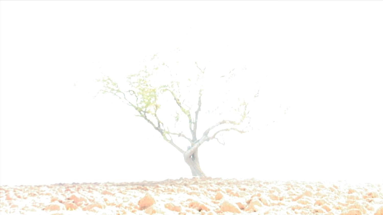 5-Gorchakovs-Wish-Tree-white.jpg