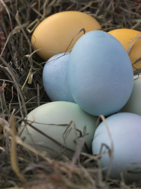 EggDying3