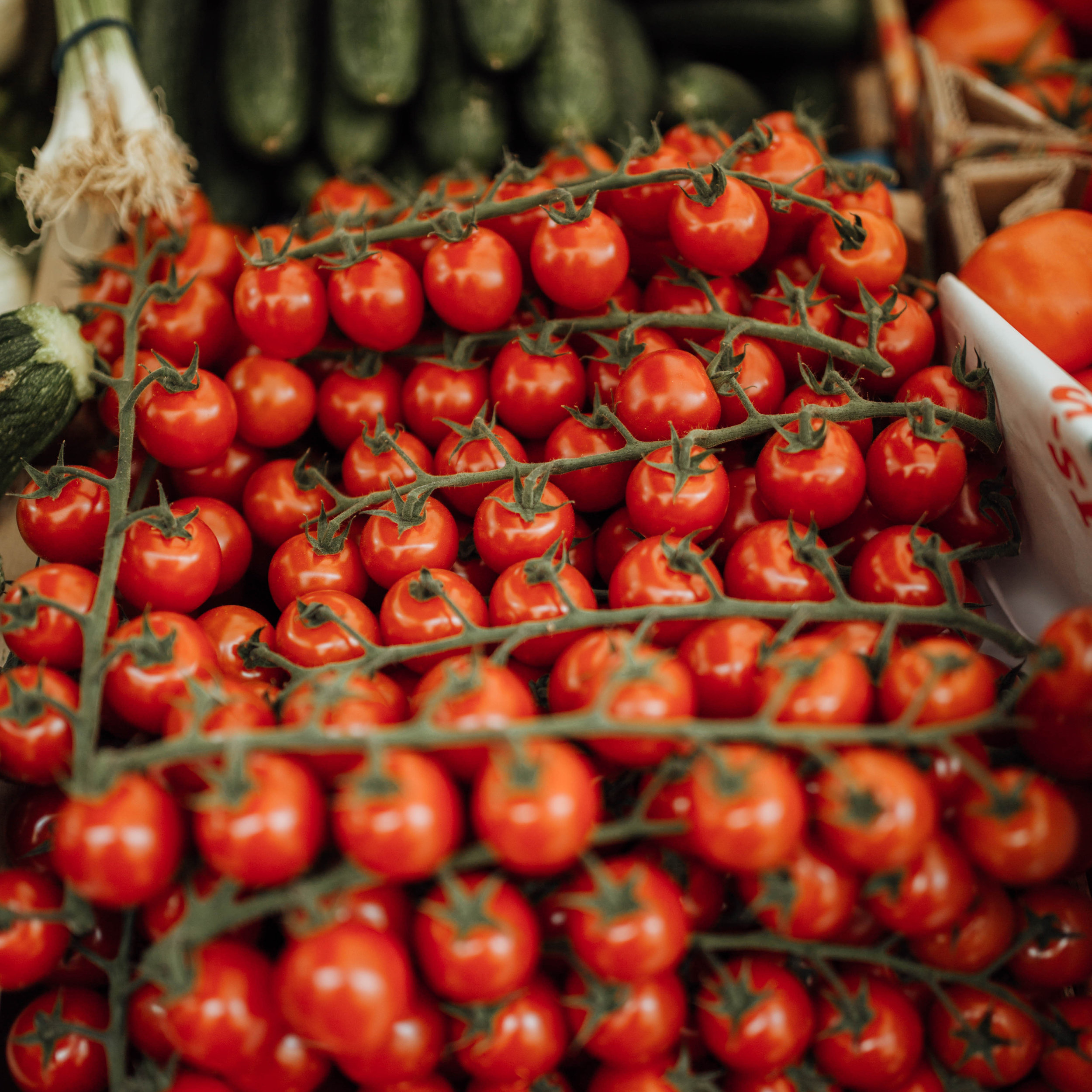 Website - Square tomatoes.jpg