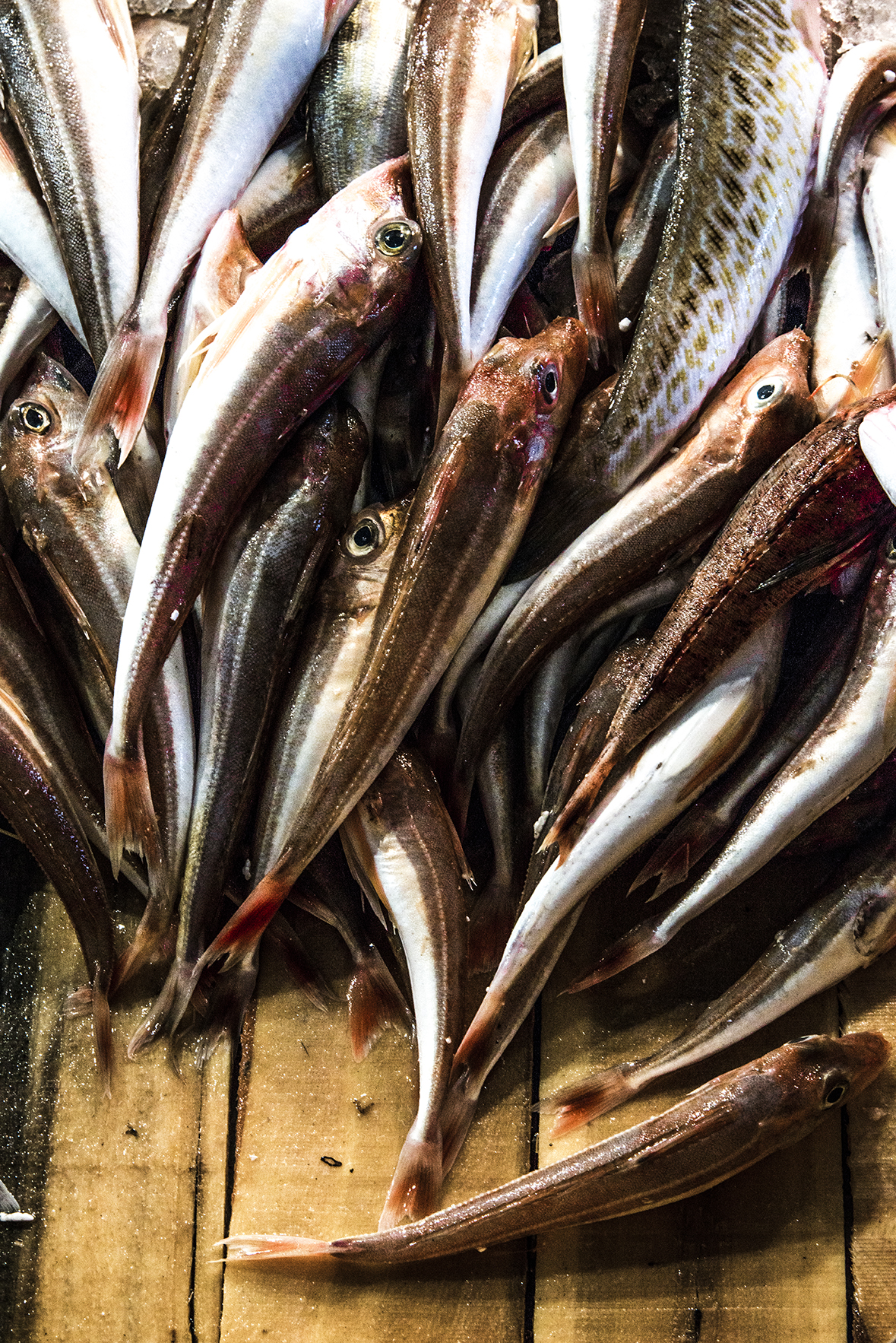 Athens Fish Market 3.jpg