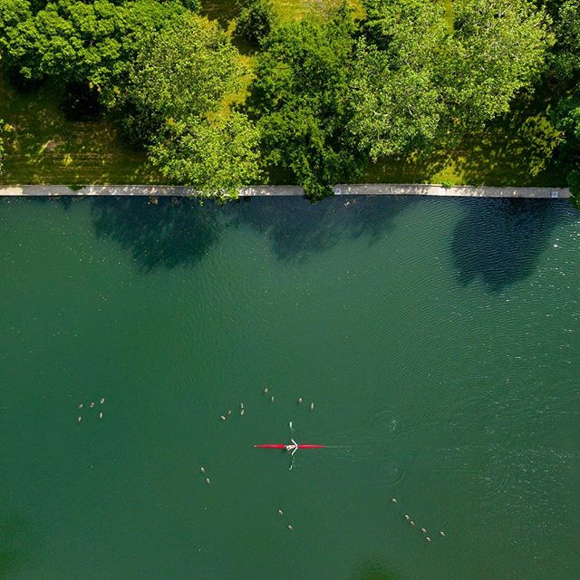 🌳 🦆🚣🏻♀️ . . . . #majordeparture #chicago #sculling #southlagoon #lincolnpark #dji #mavicpro2 #mavicpro #djimavic #aerialphotography #drone #dronephotography #dronepointofview #dronestagram #dailyoverview #aerial #droneoftheday #aviewfromabove #rldrones #fromwhereidrone #djiglobal