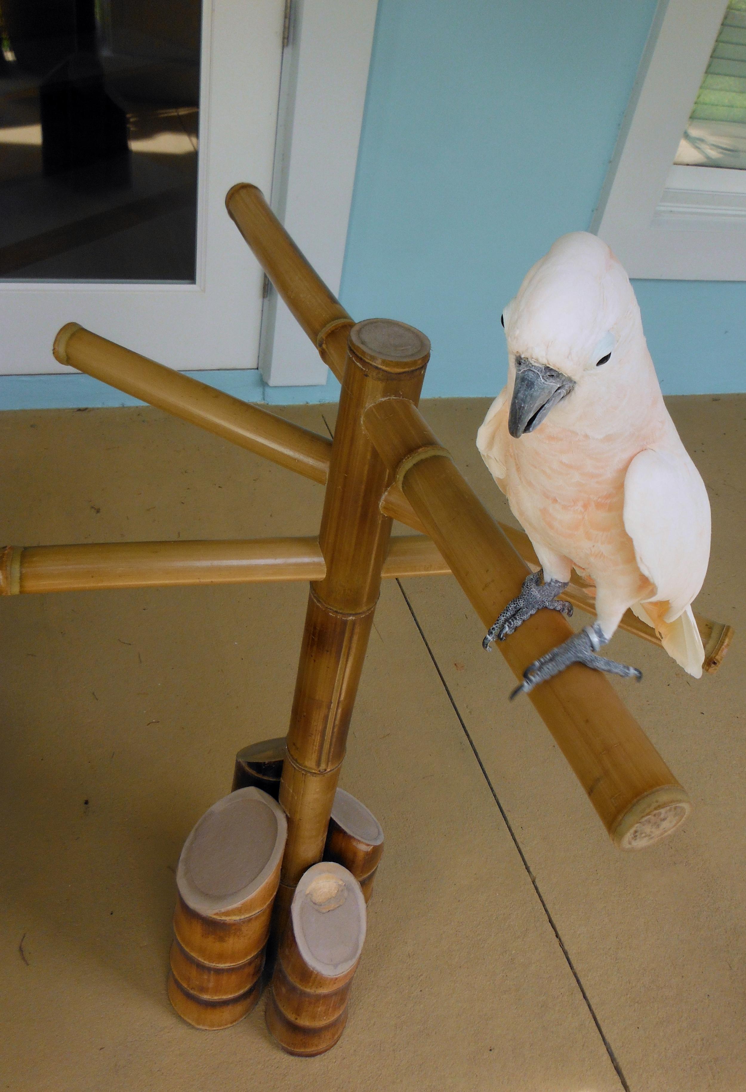 bamboo bird perch.png