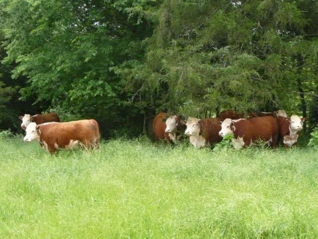 Hereford ladies in waiting.JPG