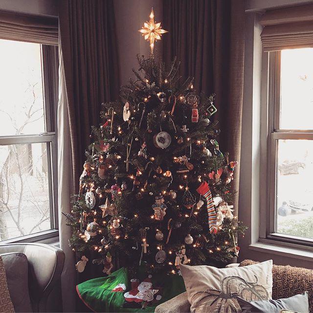Our Christmas tree/Chanukah bush 😊