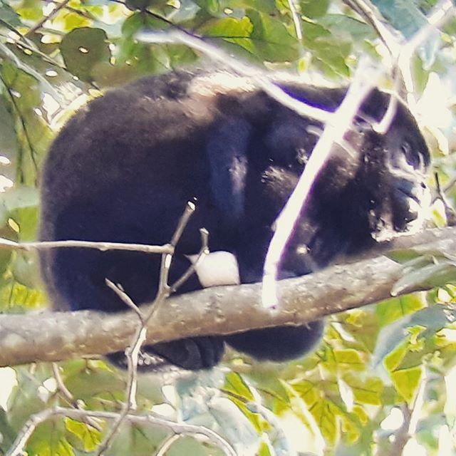 #monkeys 🐵🐵🐵