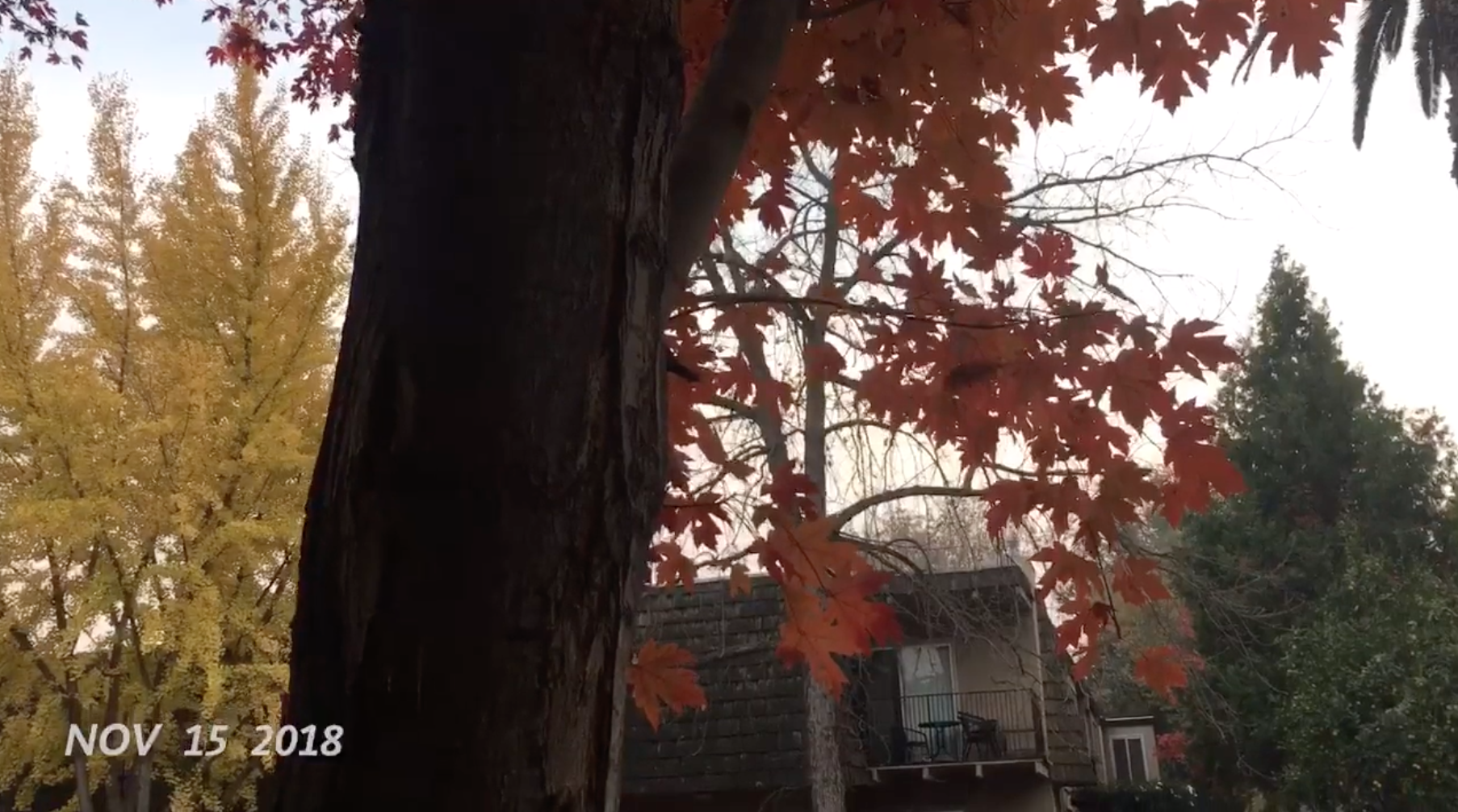 Screen Shot 2018-12-06 at 11.10.55 PM.png