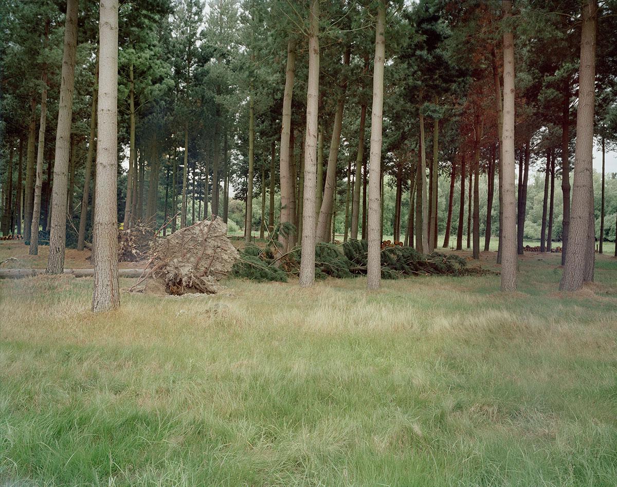 Izabela Pluta,  Uprooted tree , 2014