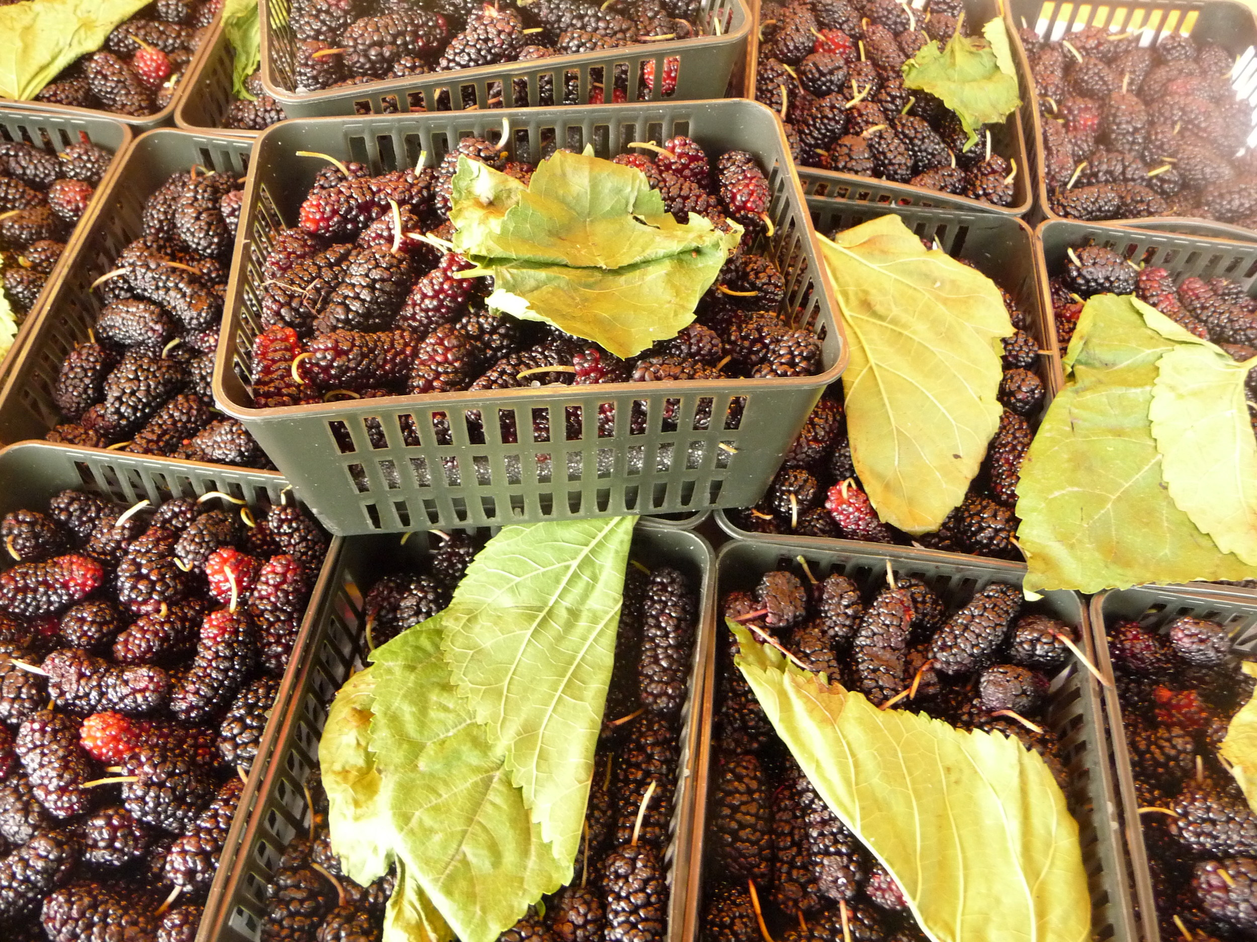 Fresh mulberries for sale in Hong Kong