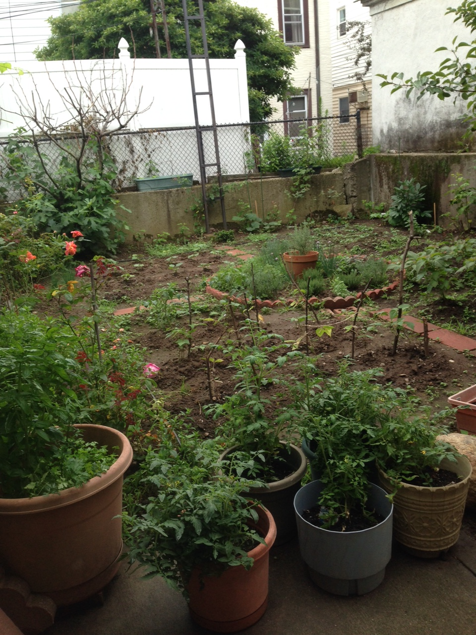 One month after, the garden on july 9th