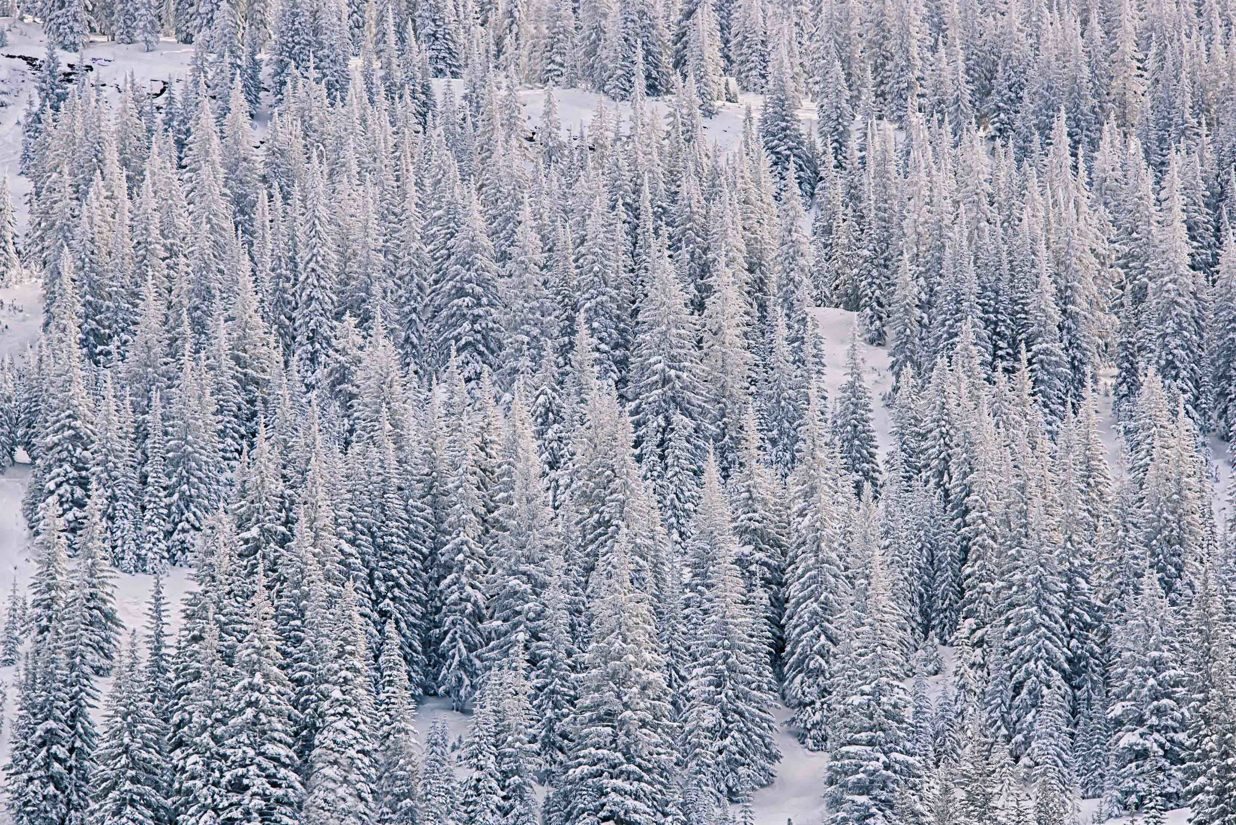 Snowcapped-1.jpg