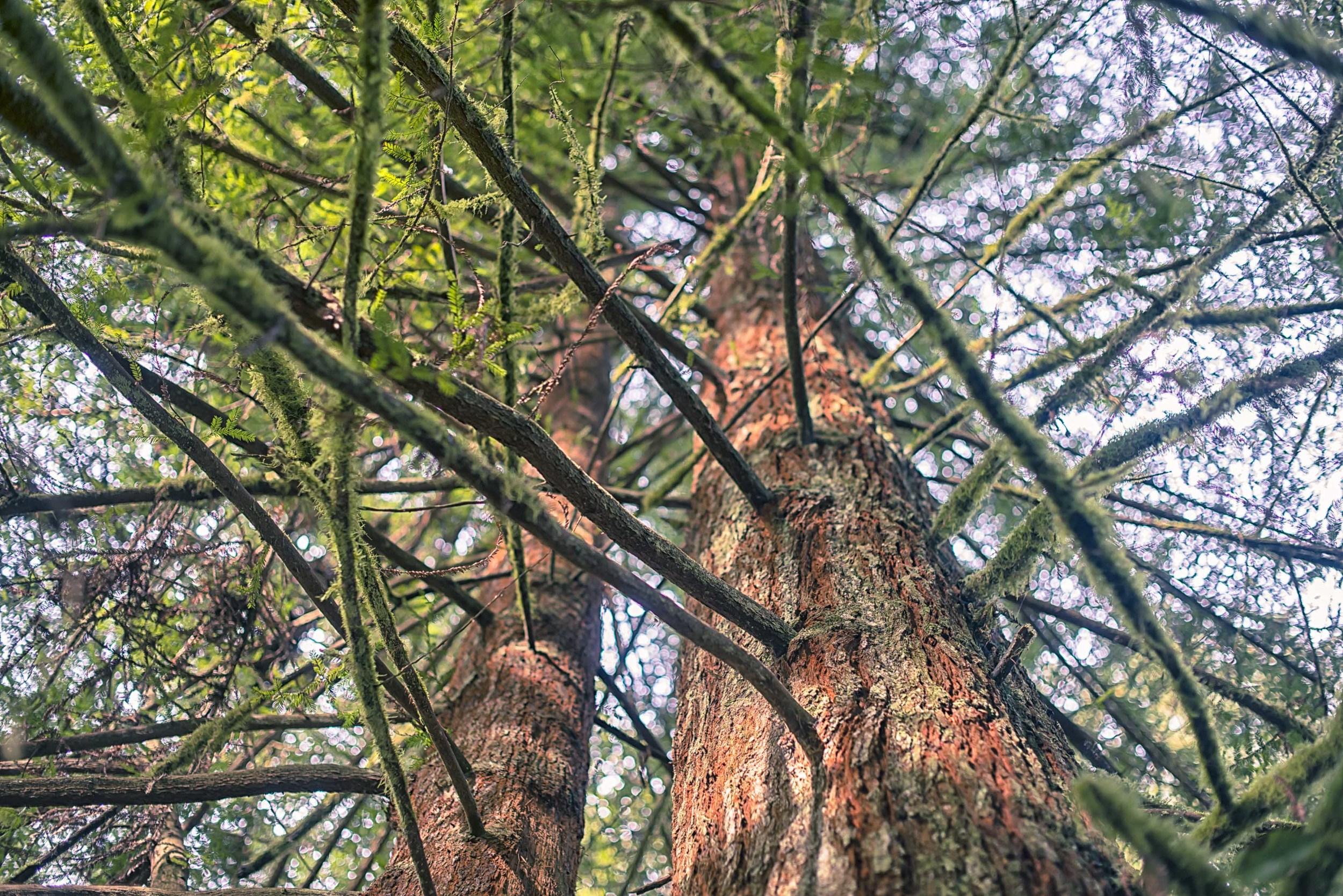 branches-1.jpg