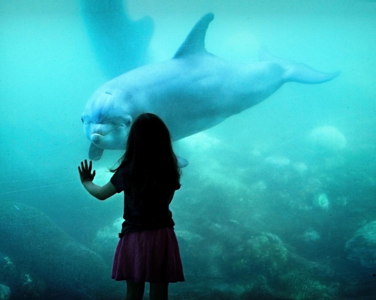 dolphin-1521998.jpg