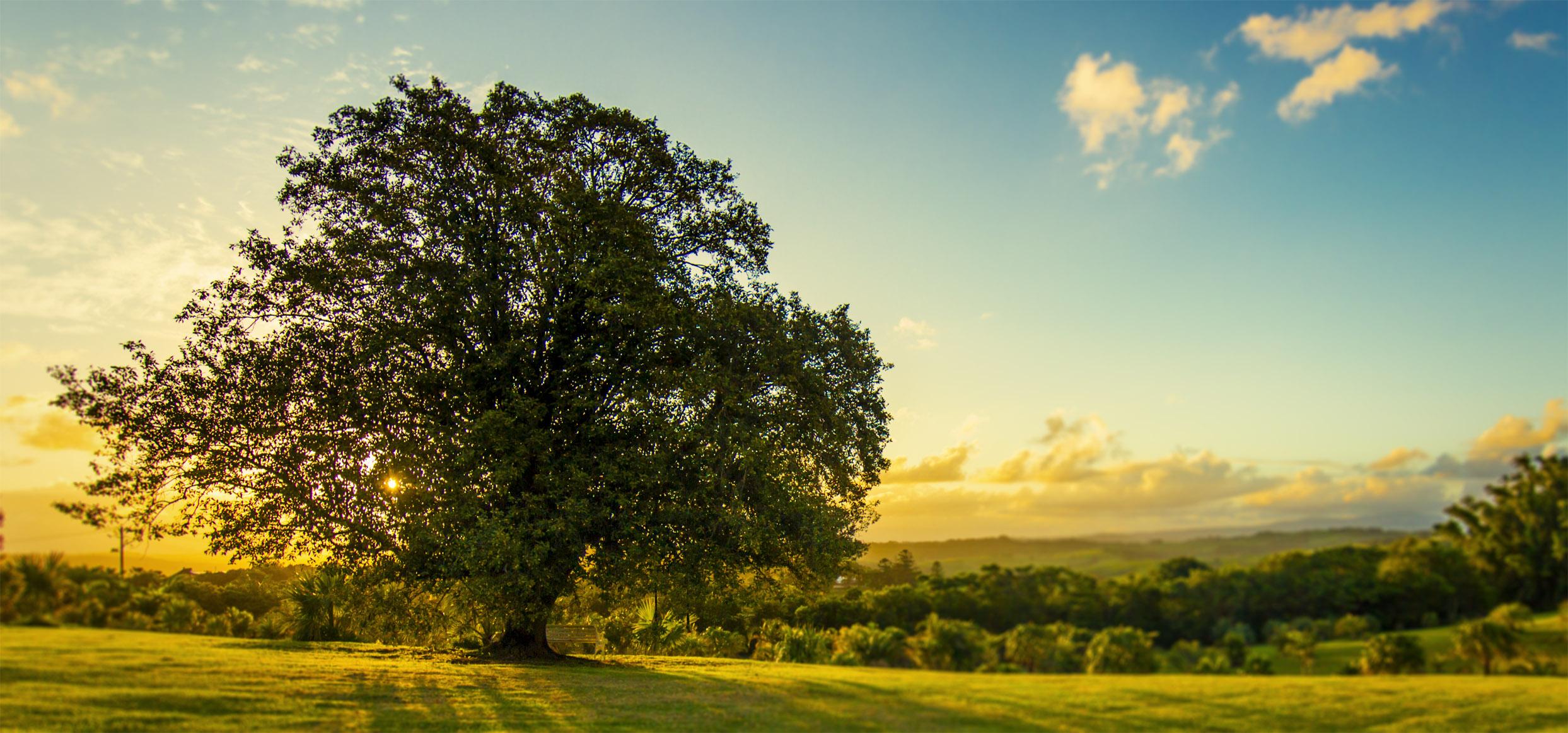 tree horizons.jpg