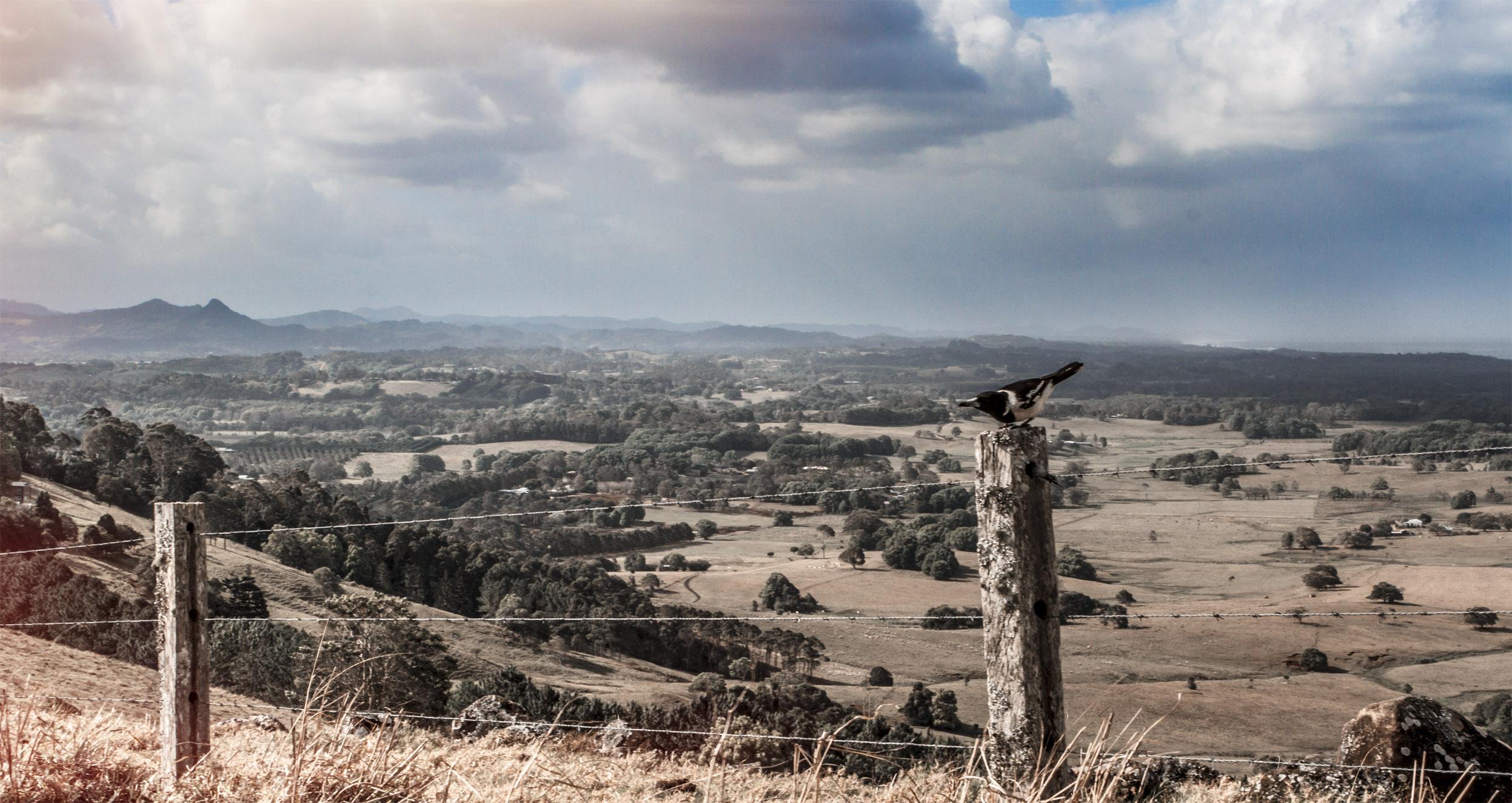 bird pole.jpg