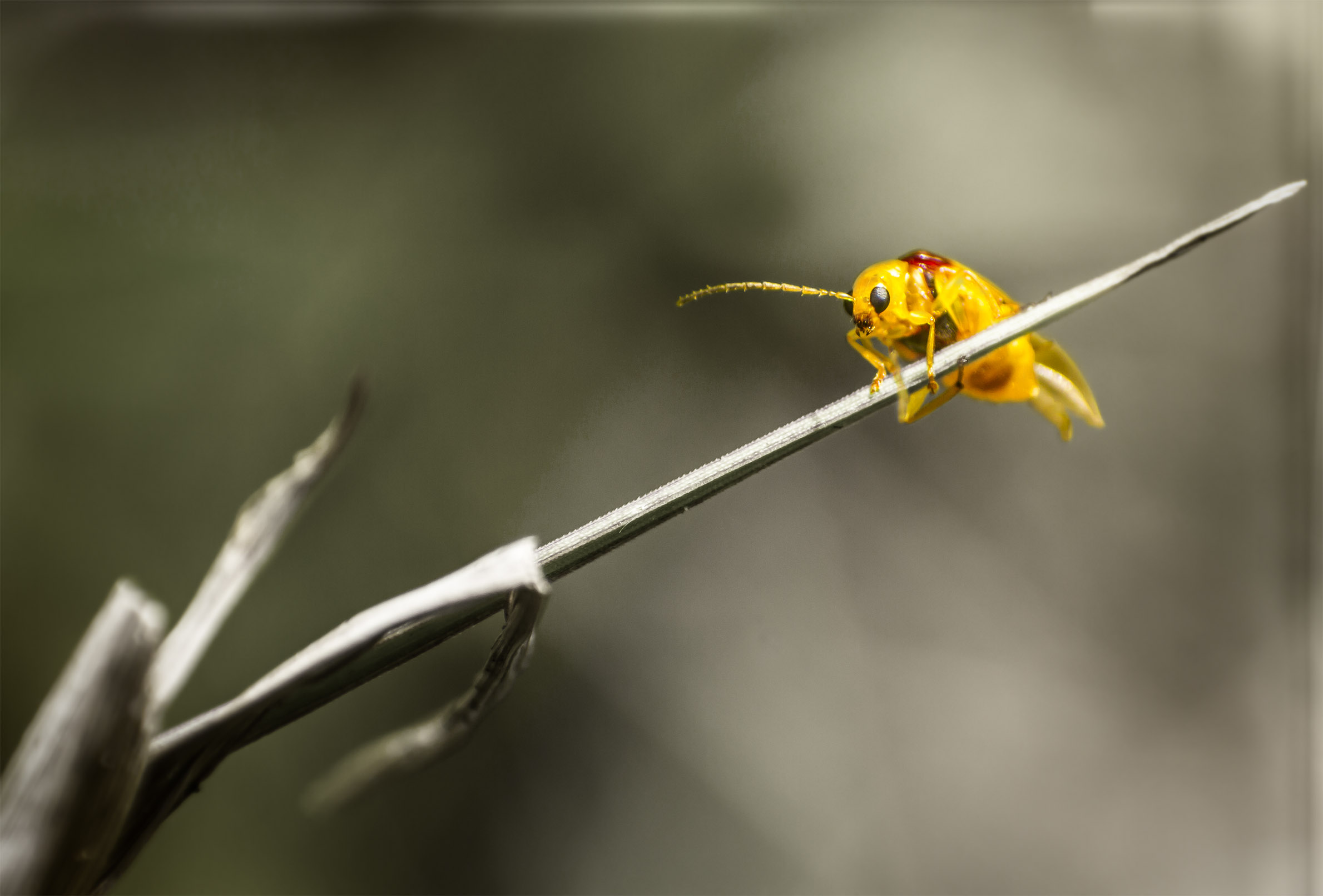 ladybeetle.jpg
