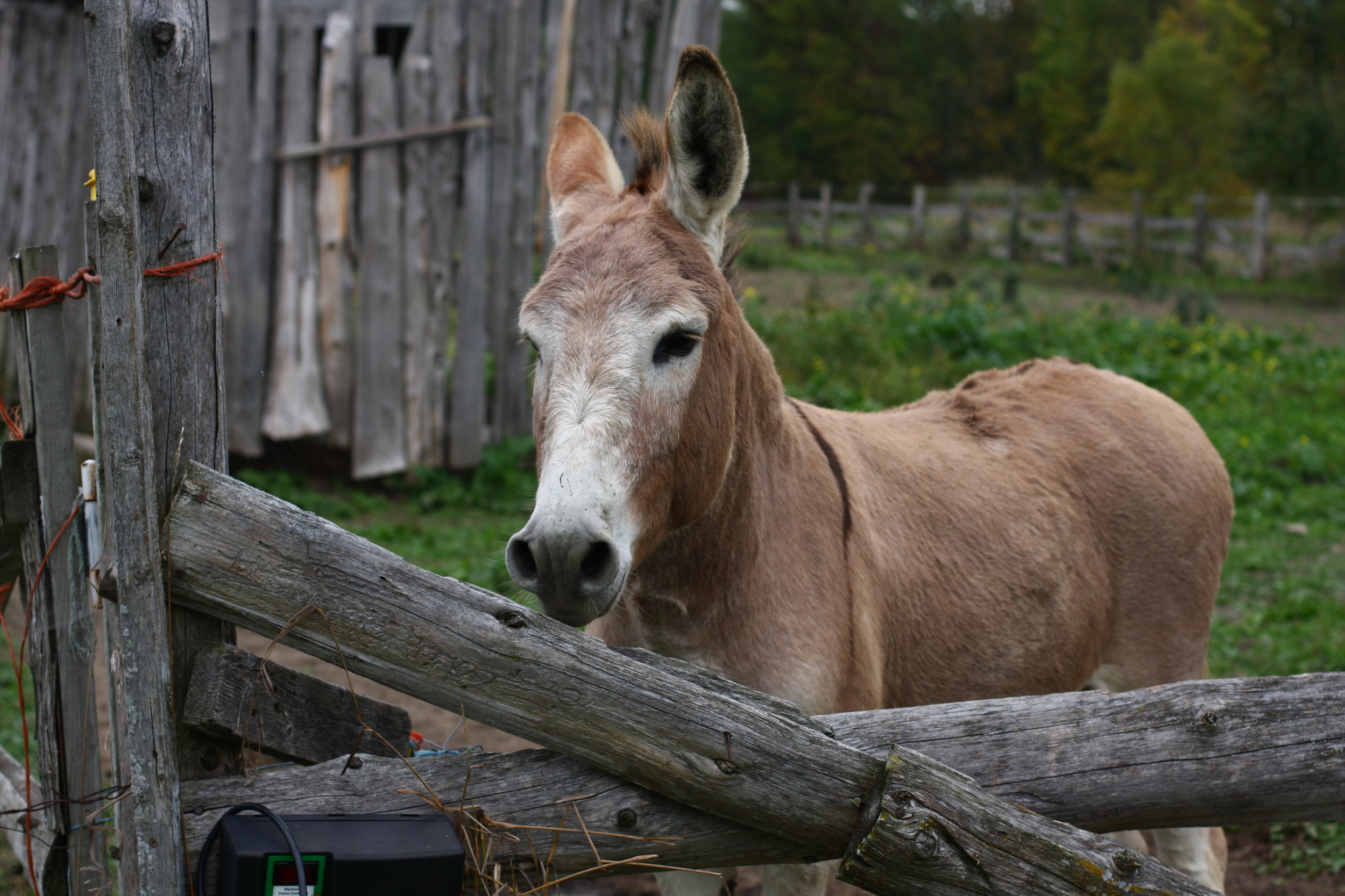 organic_farming_donkey