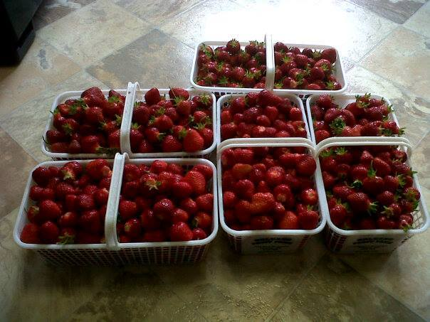 local strawberries