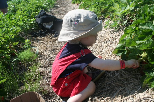 child picking strawberries