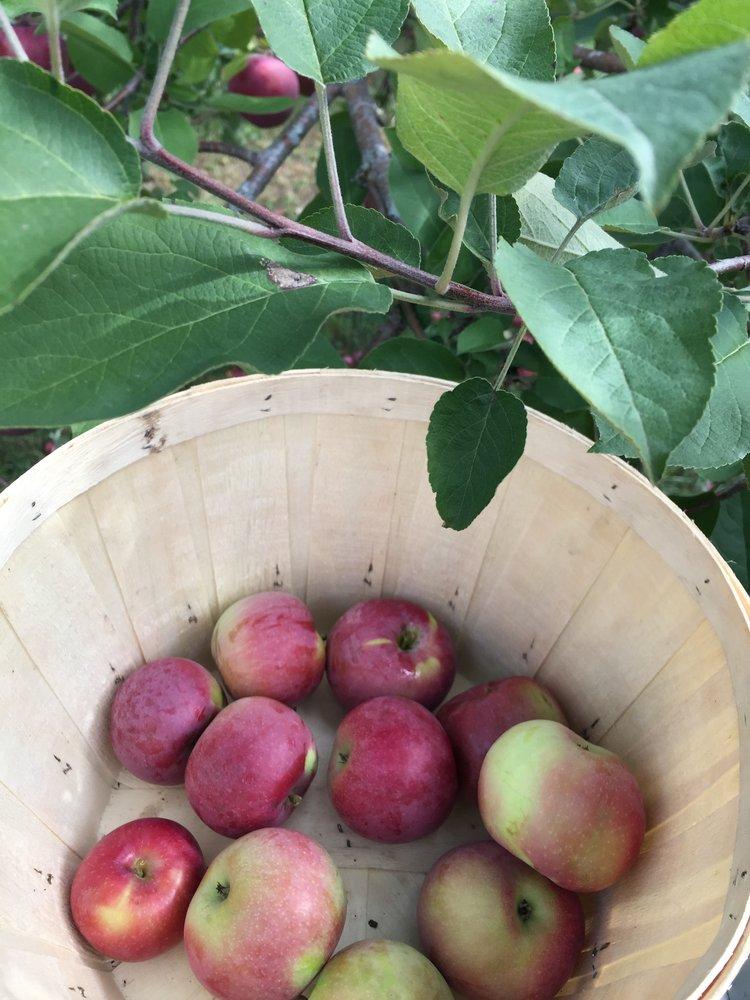 apple+picking+in+ottawa.jpg