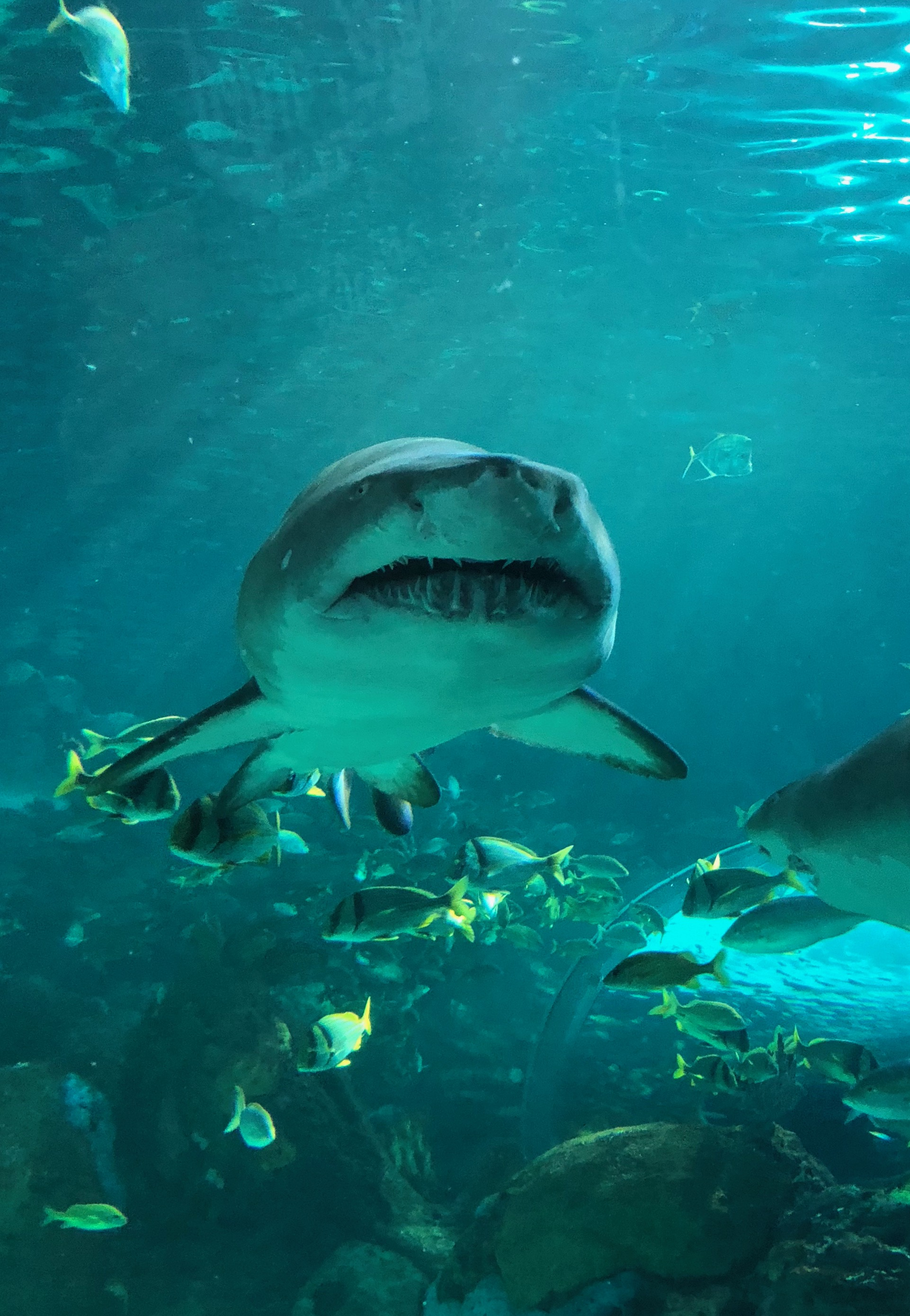 Shark at Ripley's Aquarium of Canada