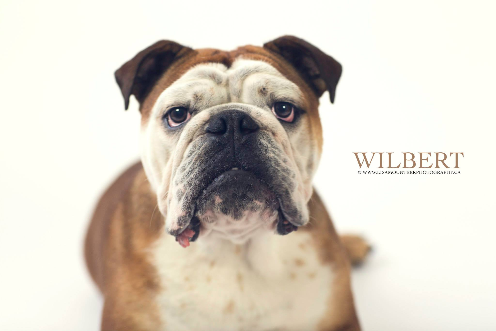 Wilbert's Birthday Portraits - Look at that Smile!