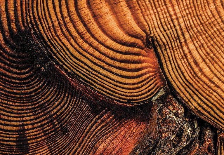 century tree