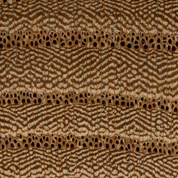 red elm end grain