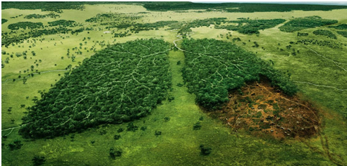 Forest, the lungs of the planet