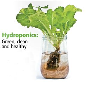 Hydroponic illustration