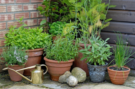 A small space is enough to grow a lot of different herbs