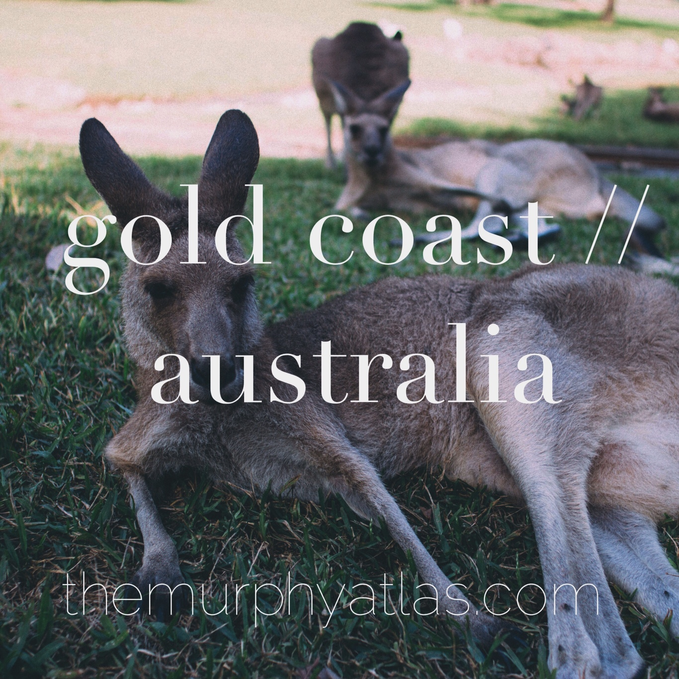 Gold Coast Australia City Guide - The Murphy Atlas