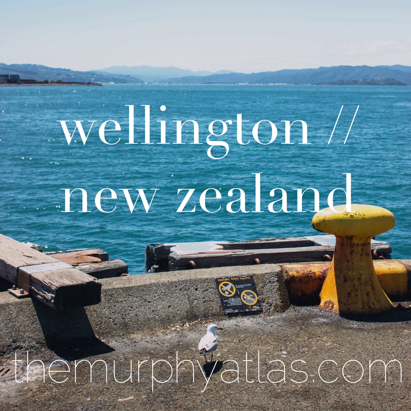 Wellington, NZ City Guide // The Murphy Atlas